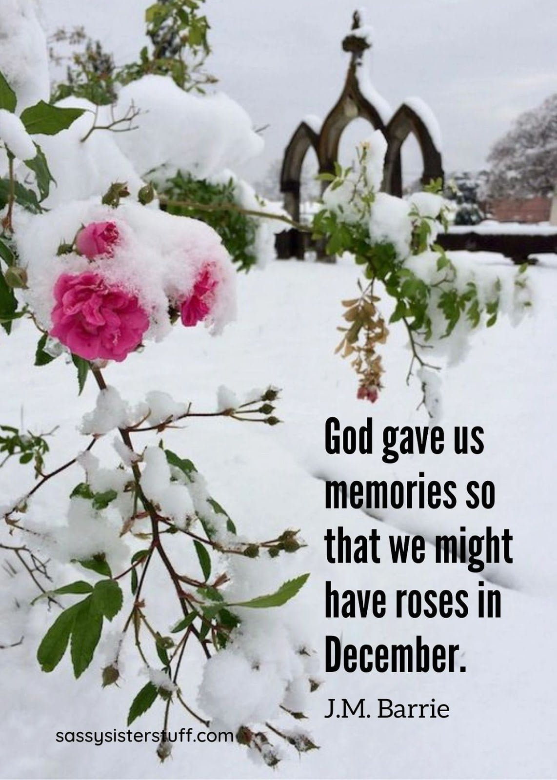 Christmas Messages to warm your heart   pink roses in the snow