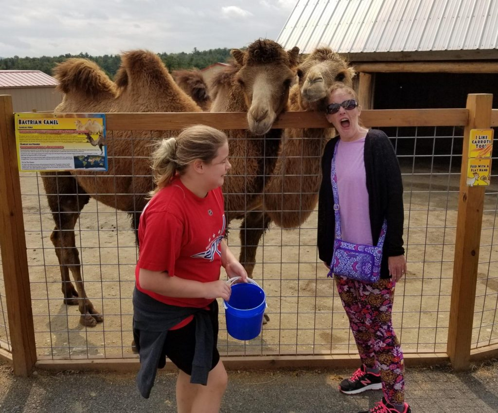 two camels reach over the fence to greet two female visitors who are chuckling about how friendly the animals are