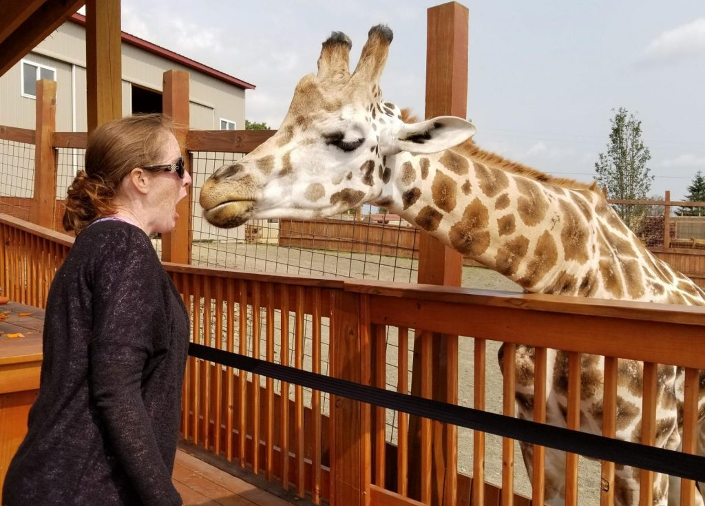 woman has a scared expression on her face when she comes face to face with a large giraffe