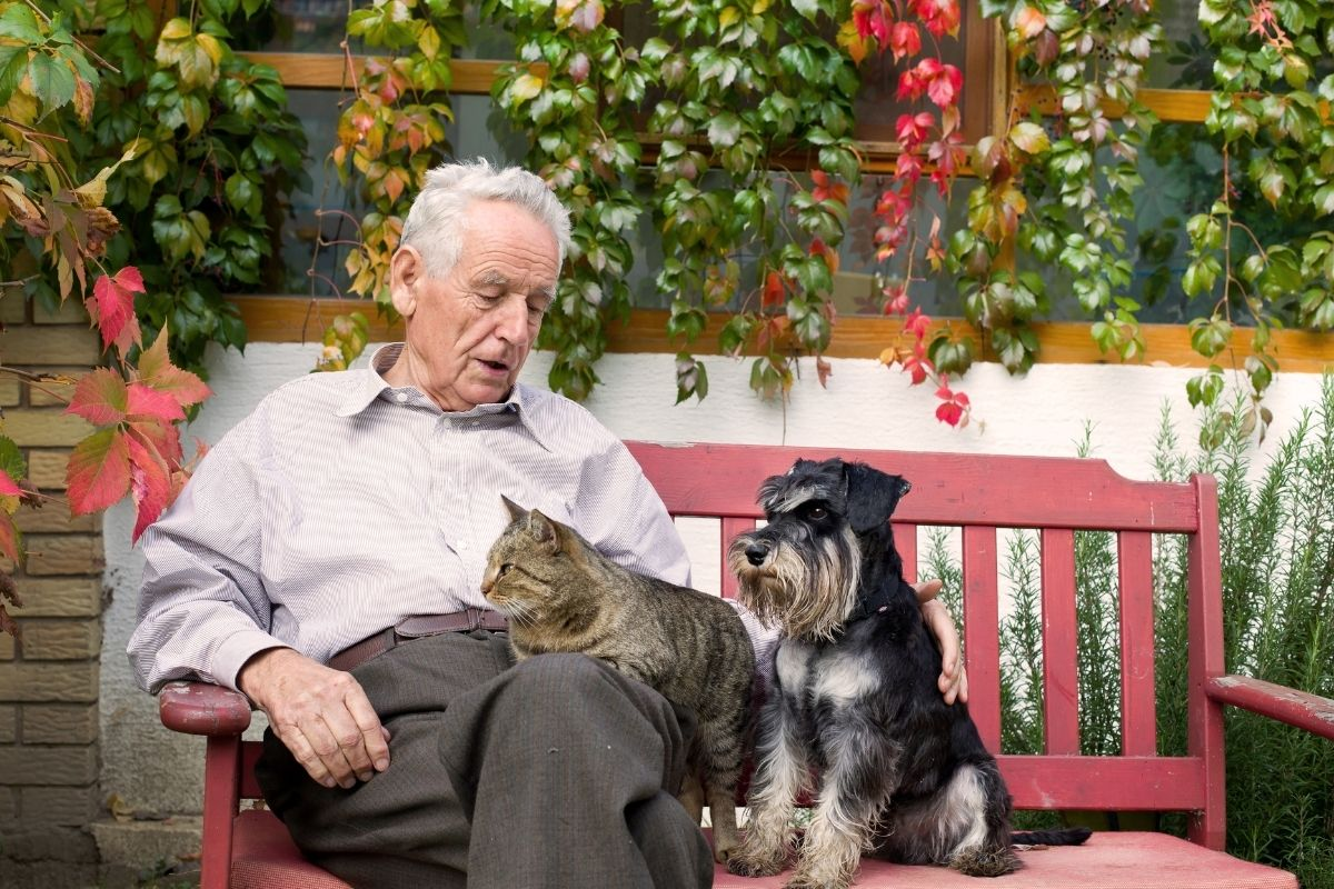 elderly man sits on a park bench with a cat on his lap and a dog next to him