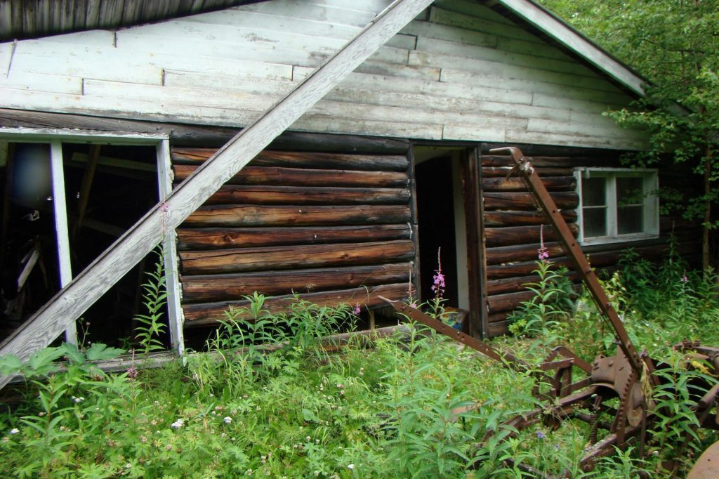 historic homestead log cabin in alaska surrounded by trees and greenery