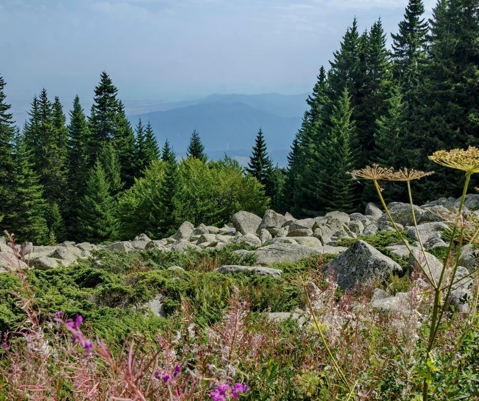 flowers and trees on a mountain edge with mountains in the background