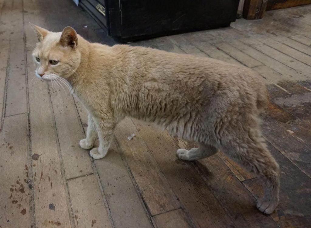stubbs the cat mayor of talkeetna alaska