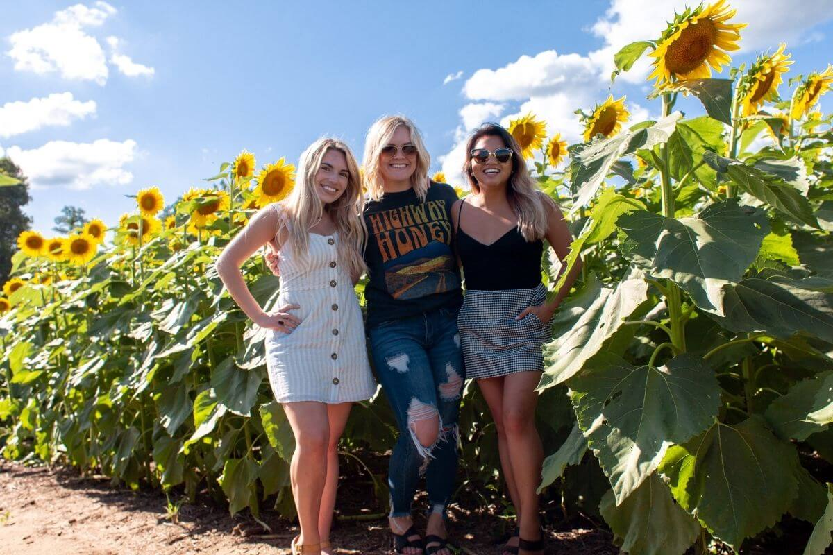 three happy young ladies enjoy social interactions together in a sunflower field