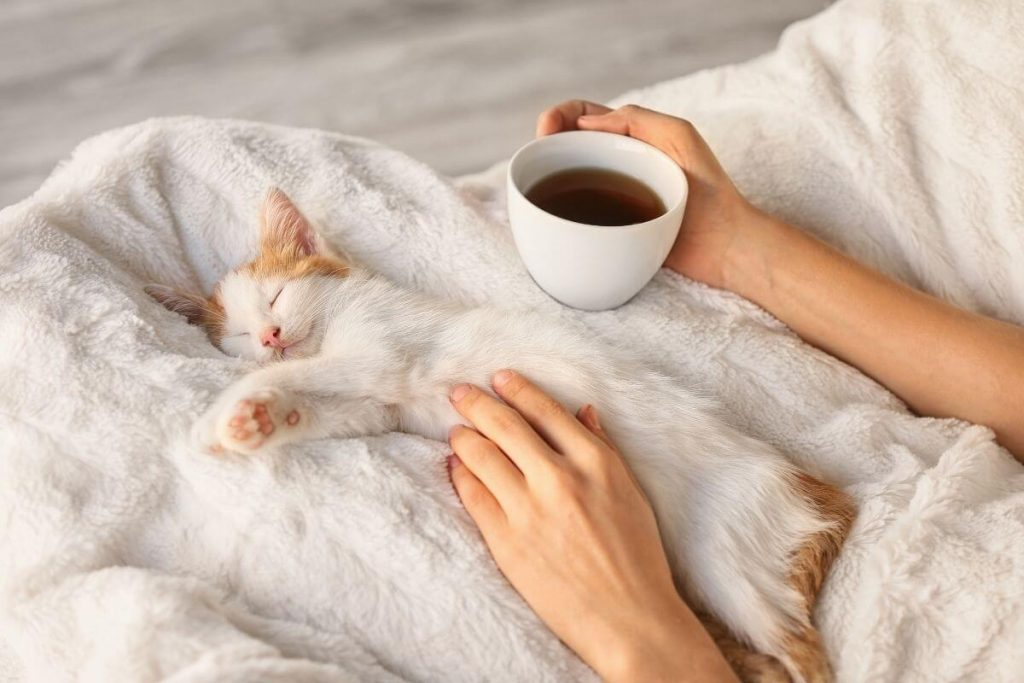 white kitten laying on a white blanket in a womans lap