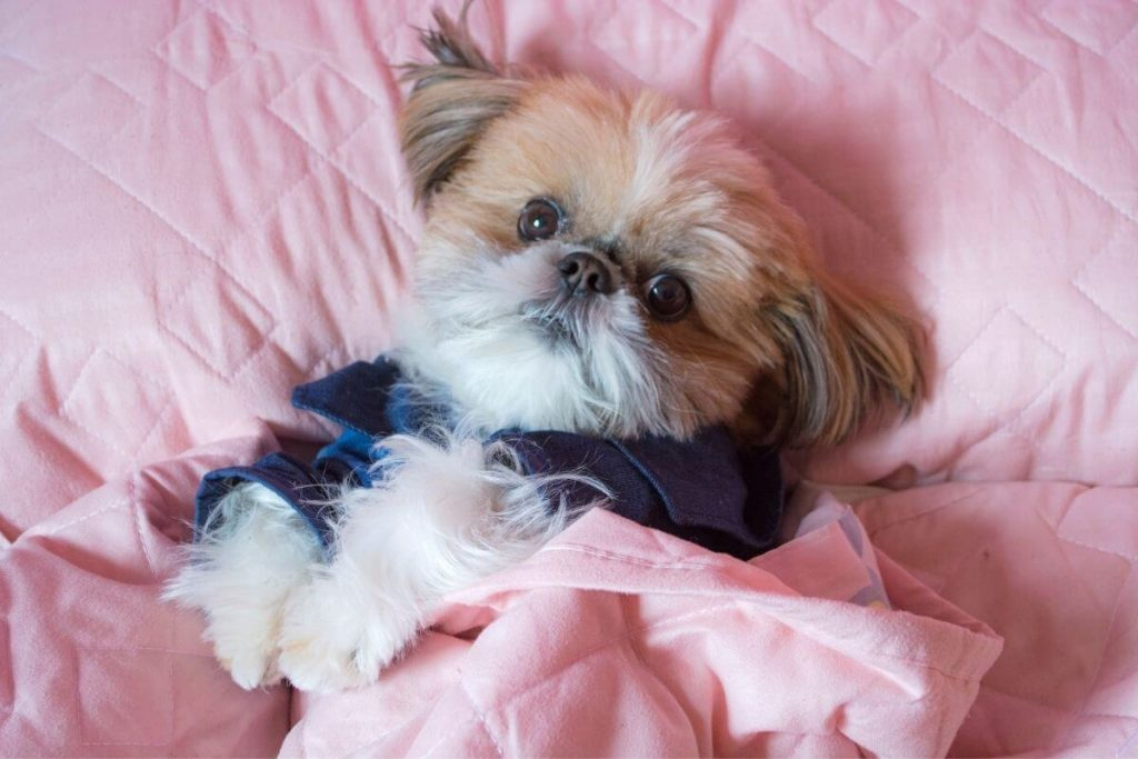 tan puppy snuggled in a pink blanket