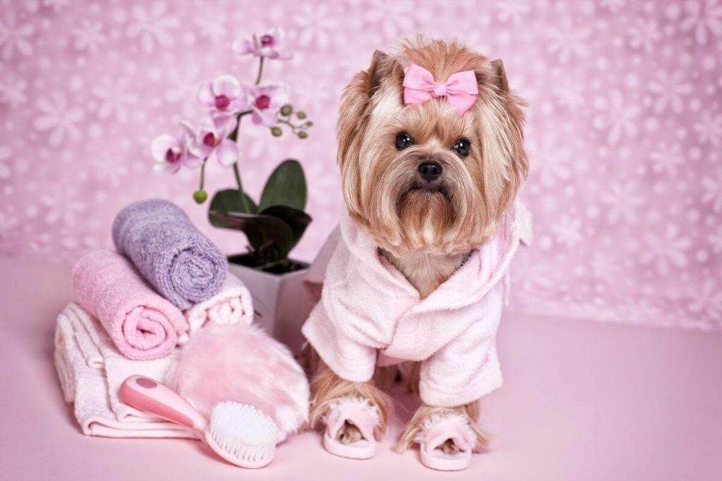 pretty girl puppy being pampered at a doggy spa with pink robe slippers hair bow flowers
