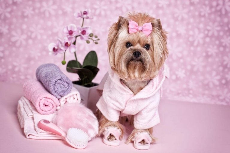 Celebrating Our Pets: Unconditional Love