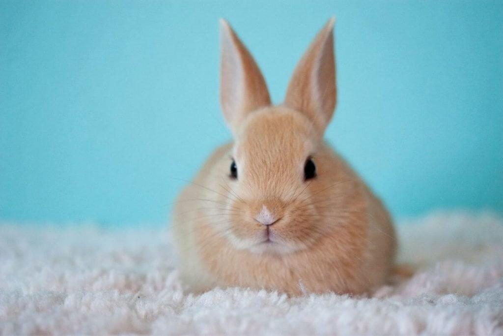 white bunny sitting on a white blanket