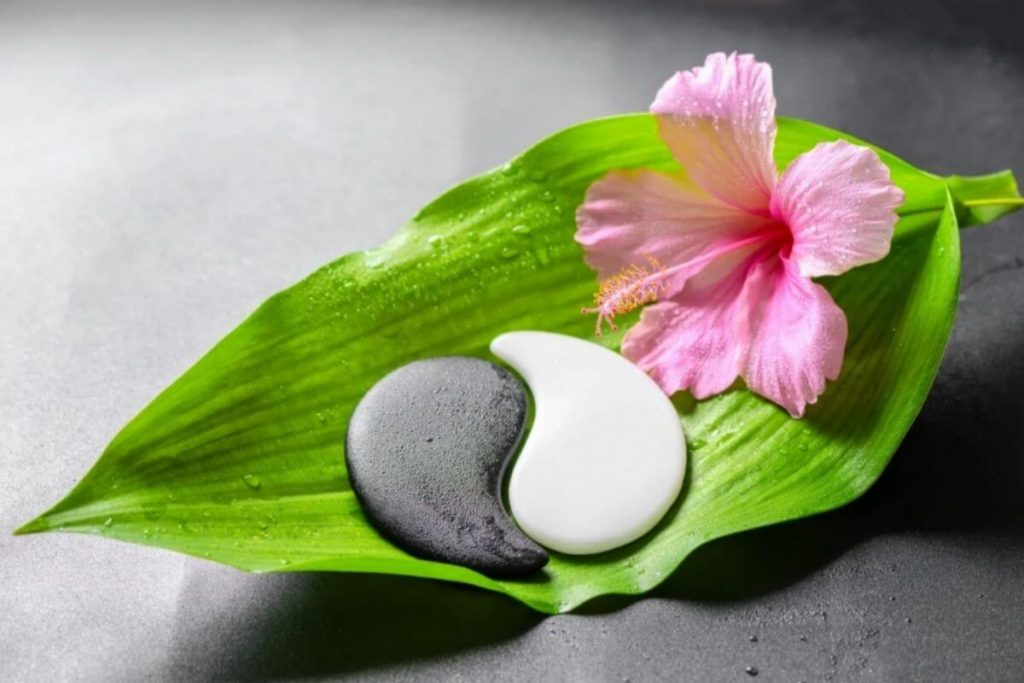 green leaf and pink flower with ying and yang rocks representing a healthy balance